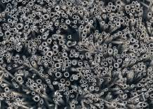 Mücken Vertreiben Hausmittel : wespen bienen vertreiben ber 30 hausmittel tipps frag mutti ~ Markanthonyermac.com Haus und Dekorationen
