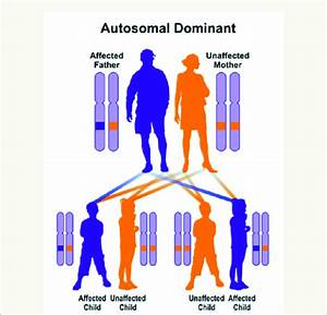 Schematic View Of The Dominant Autosomal Inheritance