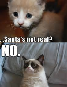 what of cat is grumpy cat grumpy cat part 1