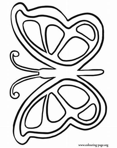 Coloring Pages Butterfly Printable Easy Colouring Random
