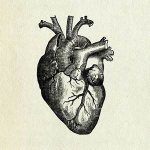 Human Heart - Cllctr: The collection site