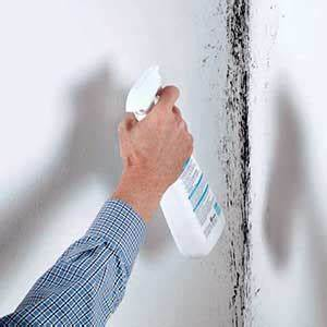 Schimmel An Der Wand Entfernen : was ist schwarzer schimmel schimmel entfernen ~ Michelbontemps.com Haus und Dekorationen