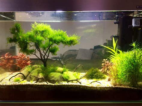 tuto cr 233 ation d un bonsa 239 pour aquarium page 2