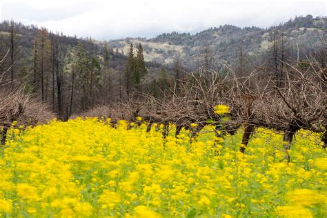 Frey Vineyards Blog Spring 2019 Vineyard Report