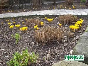 Gräser Zurückschneiden Frühjahr : pomosus tip des monats april ~ Lizthompson.info Haus und Dekorationen