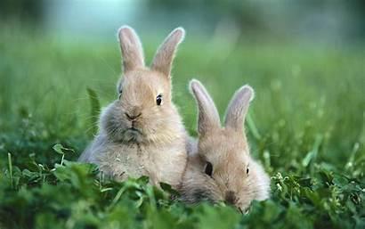 Rabbit Wallpaperesque Background