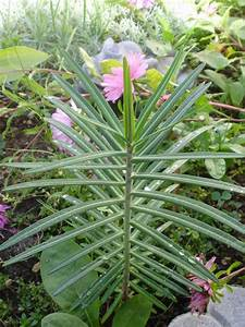 Hilfe Im Garten : ich bitte um hilfe unbekannte pflanze im garten mein ~ Lizthompson.info Haus und Dekorationen