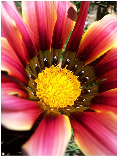 stunning macro flower photography inspiration