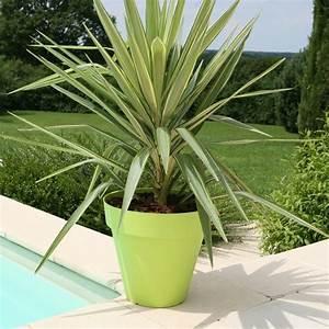 Plante D Extérieur En Pot : pot fleurs ext rieur terrasse soleilla 70cm riviera pas cher ~ Teatrodelosmanantiales.com Idées de Décoration