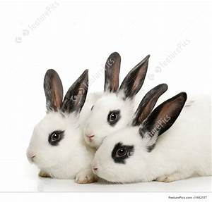 Picture Of Cute Bunnies