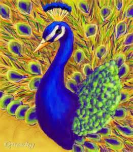 Realistic Peacock Drawings
