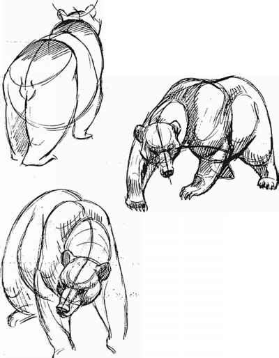 curves animal drawing joshua nava arts