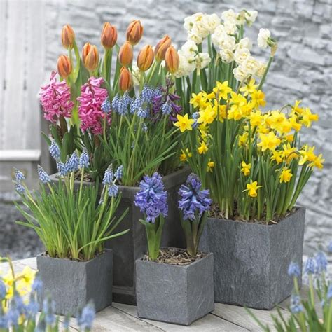 Pot Plants For Patios by A Guide To Planting Bulbs Corms Amp Tubers Love The Garden