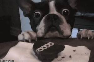 Boxer Dog GIFs - Get the best GIF on GIPHY