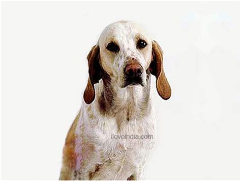 billy dogs billy dog breed