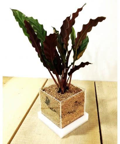 vaso piante grasse niwabox vaso per piante grasse e aromatiche in