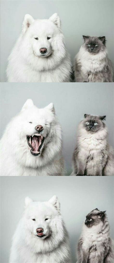 Pin By Ashley S On Animals Funny Animals Funny Animal