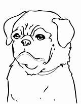 Coloring Pug Pages Dog Puppy Printable Dogs Print Beagle Minecraft Colouring Drawing Cute Pugs Animals Cool Puppies Breed Christmas Clipart sketch template