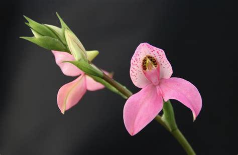 conservation  entretient des orchidees comment
