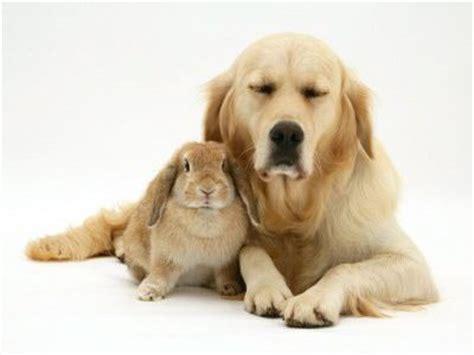 Www Wanita Hamil Bersetubuh Animal Identity Theft Cute Rabbit And Dog