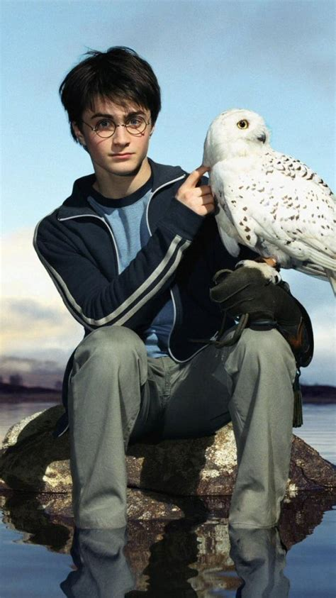 Harry Potter Wallpaper Hedwig Owl by Hedwig Iphone Wallpapers Top Free Hedwig Iphone