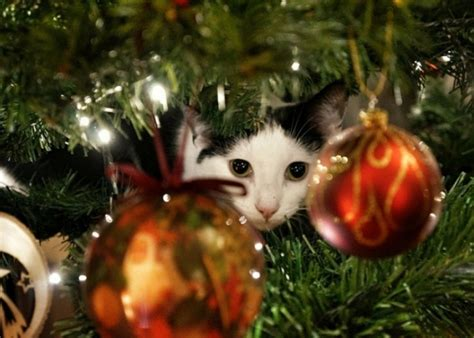 tips  cat proof  christmas tree