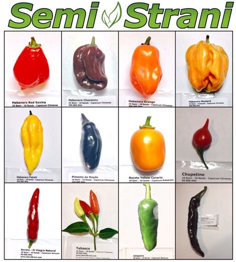 120 Pure Seeds Hot Chili Peppers Mexican Collection