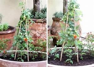Tomaten Rankhilfe Selber Bauen : tomaten auf dem balkon pflanzen tipps zur richtigen pflege im k bel ~ A.2002-acura-tl-radio.info Haus und Dekorationen