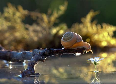 astounding macro photography  snails  vyacheslav