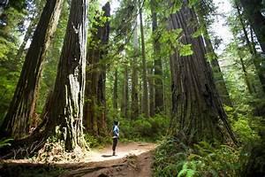 Visiting California's Redwood National Park