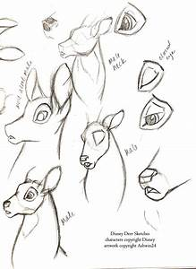 how to draw deer hooves - Google Search | art | Pinterest ...