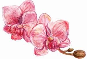 Rempoter Une Orchidee : rempoter une orchid e c 39 est facile le blog delbard ~ Mglfilm.com Idées de Décoration