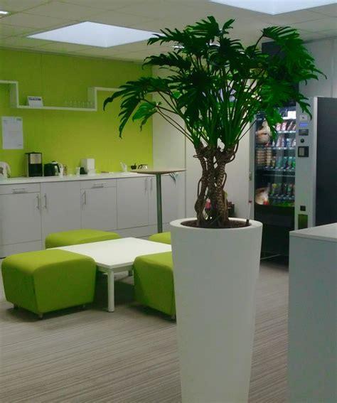 plante sans entretien interieur 28 images 1 garden planting ideas find indoor garden