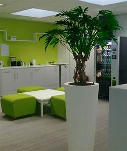 entretien plante interieur lille roubaix tourcoing With plante verte d interieur photo