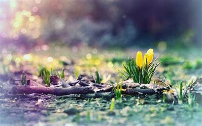 Early Spring Wallpapers Desktop Backgrounds Nature Flowers