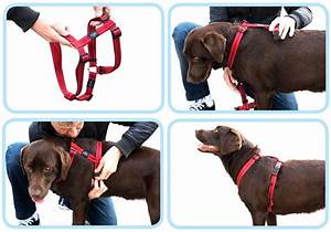 The Best Dog Harness For Running In 2016