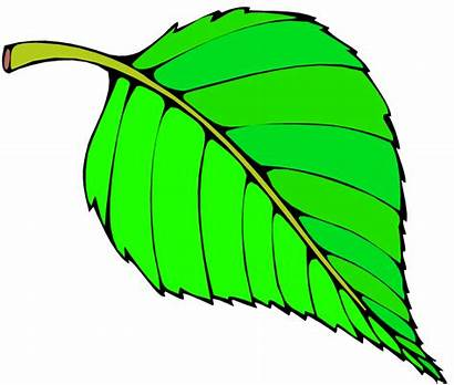 Leaf Leaves Clipart Tree Paper Clip Cartoon