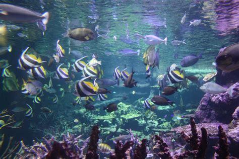 la cit 233 de la mer 224 cherbourg aquarium manche merci pour le chocolat