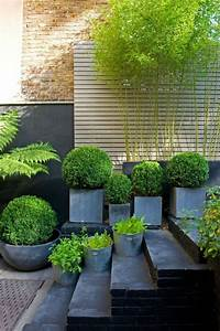 Bambou A Planter : best 25 planter bambou ideas on pinterest jardiniere ~ Premium-room.com Idées de Décoration