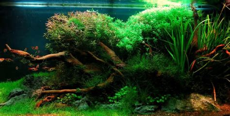 Aquascaping For Beginners by Aquascaping For Beginners Getting The Basics Right The