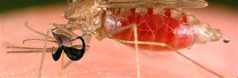 5 Supervillain Tactics Science Is Using to Kill Mosquitoes ...