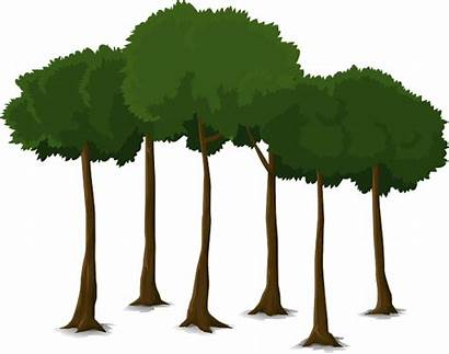 Tree Canopy Trees Trunk Nature Transparent Graphic