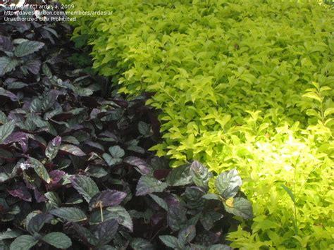 Tropicals & Tender Perennials Tropical Plants #40, 1 By
