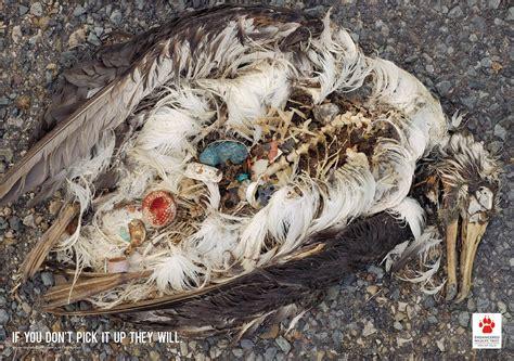 Endangered Wildlife Trust Trash Seabirds