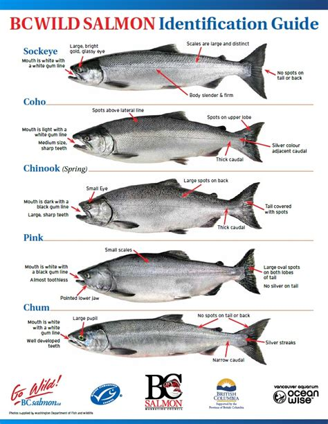 types of salmon salmon fishing island outfitters fishing hunting in victoria bc