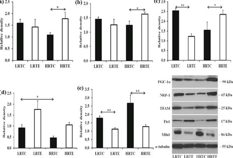 The scientific study of the natural processes of living things: Mitochondrial biogenesis-associated transcription factors ...
