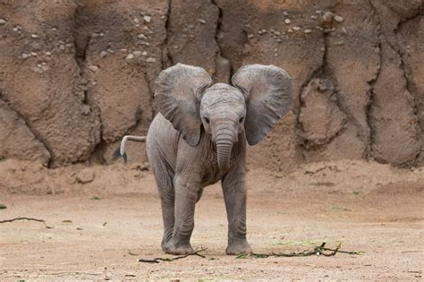 Animated Elephant Wallpaper - baby elephant wallpaper 66 images