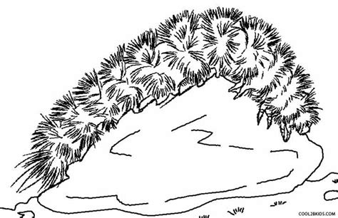 printable caterpillar coloring pages  kids coolbkids