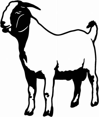 Goat Boer Clipart Silhouette Decals Decal Goats
