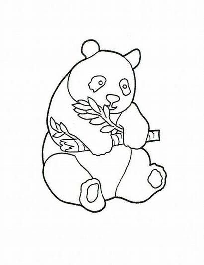Panda Coloring Pages Bear Drawing Printable Pandas